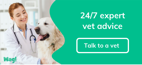 Wag! Ask a Vet
